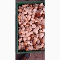 Продам белый гриб замороженный 1 сорт. Киев