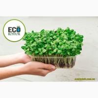 Продам микрозелень растущую оптом
