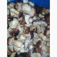 Продам білий гриб. Цілий
