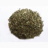 Лещина обыкновенная (листья) 1 кг