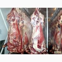 Продам мясо говядины I категории на кости, Корова 80+, охлажденная. Блочное мясо