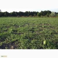 Продам арбуз (Черниговская обл) поле сегодня открыли