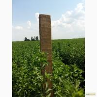 Мята перечная трава, лист !Оптом от 100 кг