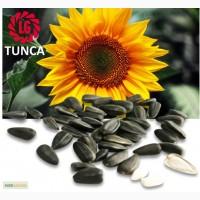Семена подсолнечника Limagrain TUNCA / Тунка (США)