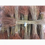 Подвой для вишни и черешни - Антипка (маголебская вишня) 1 сорт - цена - 2грн