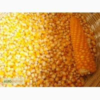 Куплю кукурузу по луганской области