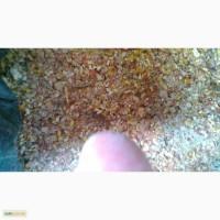 Кукуруза битая без примесей
