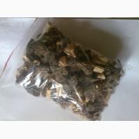 Продаю грибы сморчки сушёные Киев ( купить сморчок сморжі, зморжі, зморшок, зморшки)