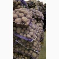 Продам товарный картофель, сорт Славянка и Бела Росса