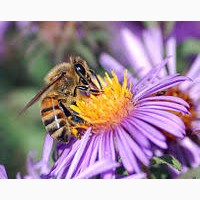 Продам бджолосім#039;ї 2018 року