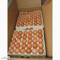 Продам куриное яйцо оптом