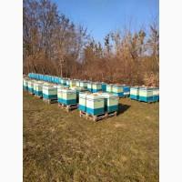 Продам бджолосімї в Рівненській обл