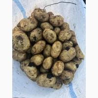 Покупаю молодую картошку