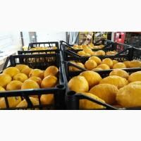 Продам лимон оптом