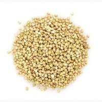 High Quality Buckwheat for sale