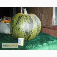 Продам семена тыквы-кабачка