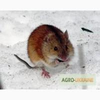 Родентицид «Бактеронцид гель» для борьбы с мышевидными вредителями