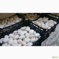 Доставка грибов