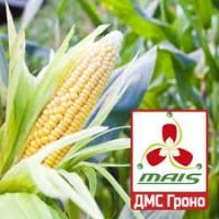 2018 рік! Насіння кукурудзи ДМС Гроно (Маїс) ФАО 260 кукуруза Маис