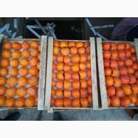 Продам Азербайджанскую хурму Каролек