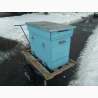 Продаем 37 пчелосемей