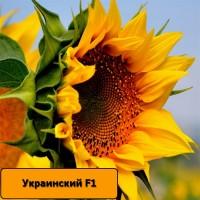 Насіння соняшника Український F1 / Подсолнечник Украинский F1