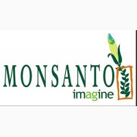 Семена сои MONSANTO Мaxus