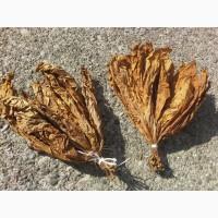 Продам листя тютюну сортів Вірджинія і Тернопільський