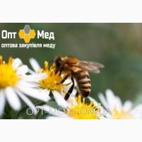 Закупівля якісного меду від 300 кг ОПТ-МЕД