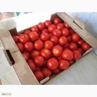 Реализуем помидоры оптом доставка наилучшее качество