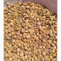 Куплю Сою (низкий протеин, битую, влажную)
