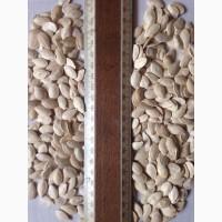 Семена тыквы продаю в ассортименте