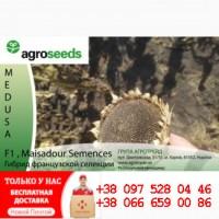 Гибрид подсолнечника - MEDUSA - Гибрид французской селекции / Agroseeds - Agrotrade