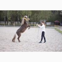 Продам пони