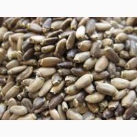 Зерно расторопши пятнистой