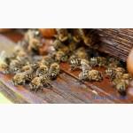 Бджолопакети 2020