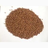 Cheap Organic Buckwheat