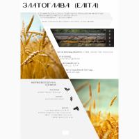 ДП ДГ ДНІПРО продаж пшениці від виробника, сорт Златоглава, категорія Еліта