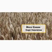 Продам насіння озимого жита сорту Синтетик 1-Р