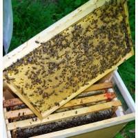 Продам бджолопакети з матками 2018 року