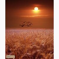 Куплю зерновые за наличные