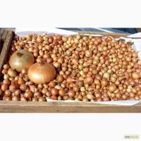 Продам лук-севок разные фракции