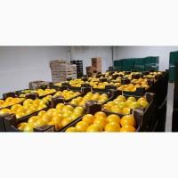 Продам помидор тепличный красных, розовых и желтых сортов