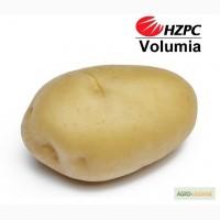Насіннєва картопля Волюмія