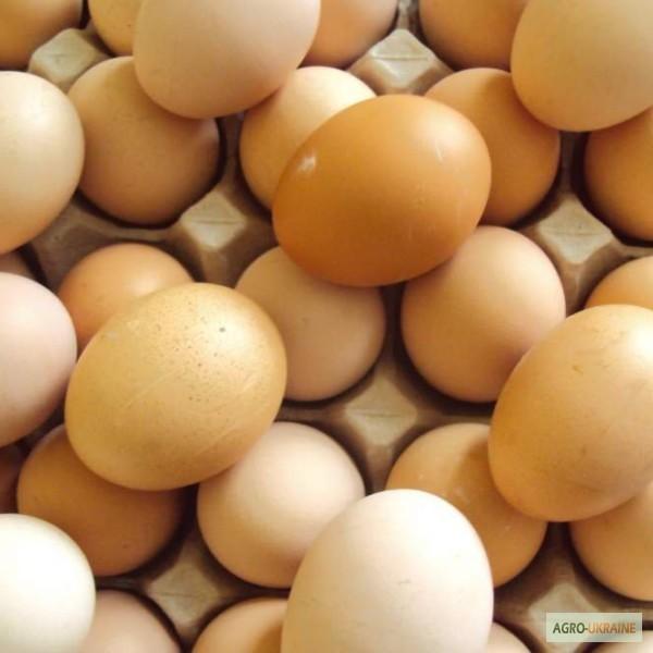 Оптовые базы воронеже купить оптом яиц