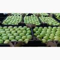 Продам яблоки в больших количествах от польского производителя