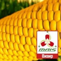 2018 рік Насіння кукурудзи Візир Маїс ФАО 350 кукуруза Маис