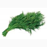 Продам зелень Укроп Петрушка и другая зелень