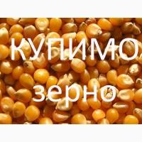 Закуповлюємо по Західних областям кукурудзу
