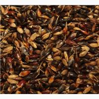 Семена суданской травы МИРОНОВСКАЯ 10 элита 1 репрод
